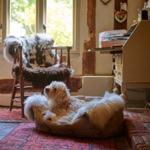 Haustier Matten für Hunde oder Katzen